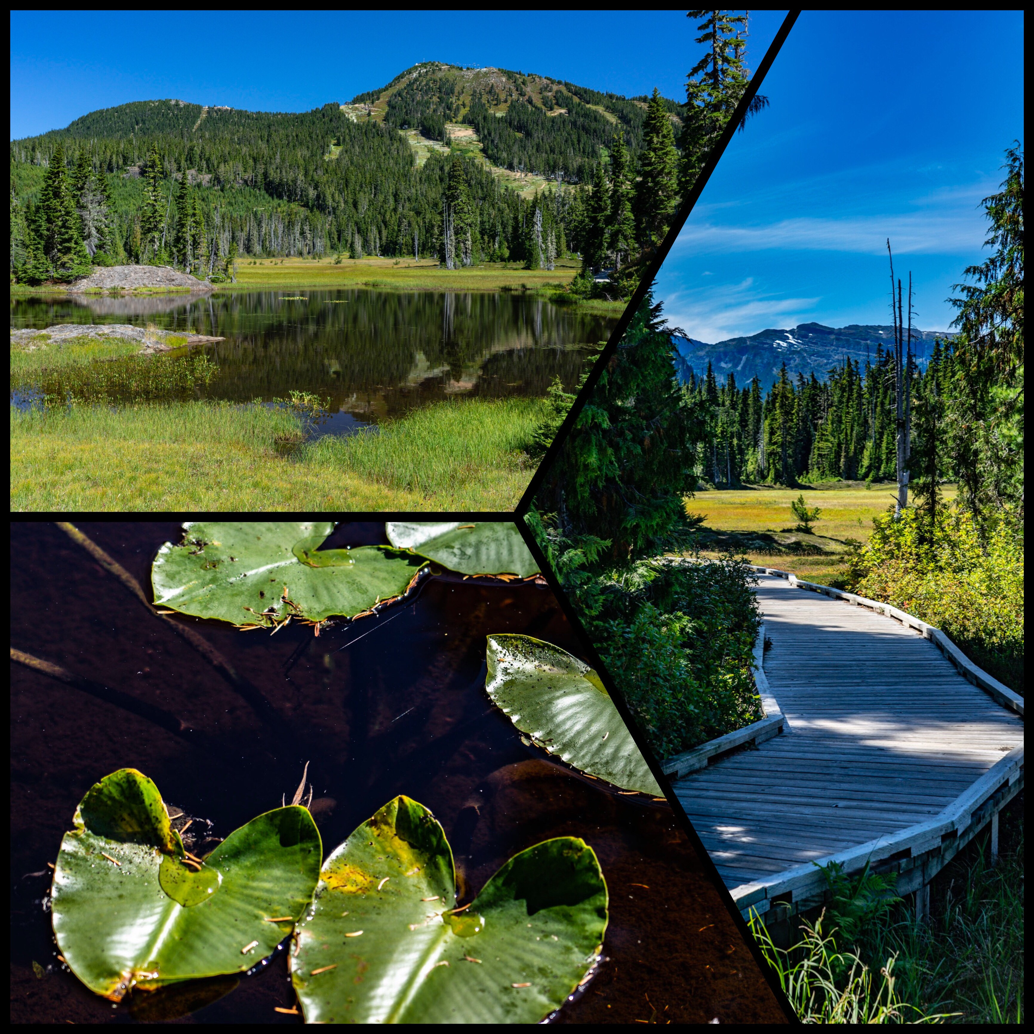 Strathcona Park ouest canadien